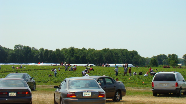 Picking Field