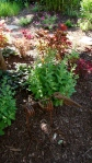 COLEUS GARDEN WITH METAL CRITTER