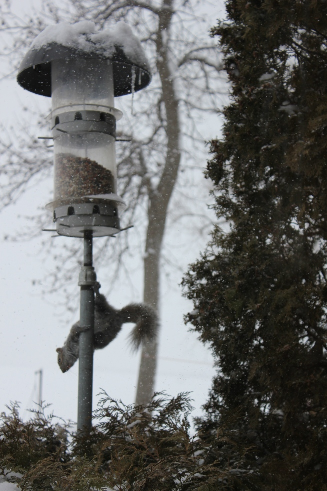 one of two squirrels raiding the feeder...